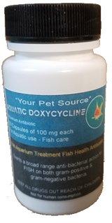 50 Capsules - Fish Aquarium Treatment Fish Health Antibiotics