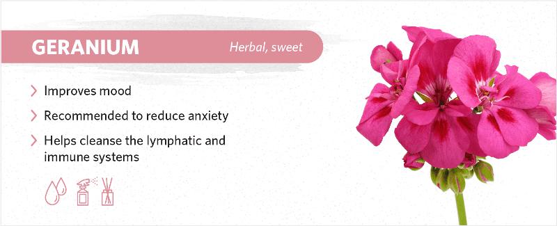 scents-to-help-you-sleep-geranium