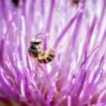 How A Doctor Found 4 Live Bees In A Woman's Eye