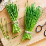 Wheatgrass: Not Given It's Right Due